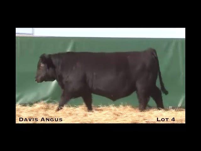 Davis Angus Lot 4