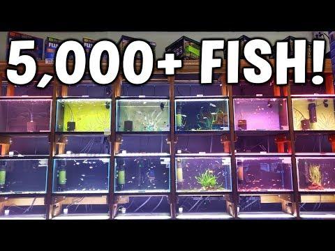 EVERY AQUARIUM At Aquarium Co-Op - Aquarium Tour