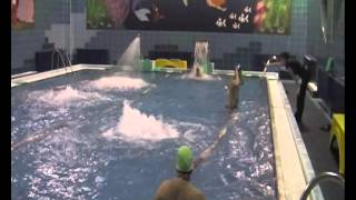 Видеоролик  ДЮСШ 62 Москва Жулебино бассейн Парус(, 2012-03-05T16:39:28.000Z)