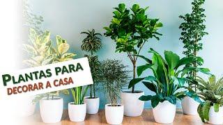 9 Plantas que Estão na Moda