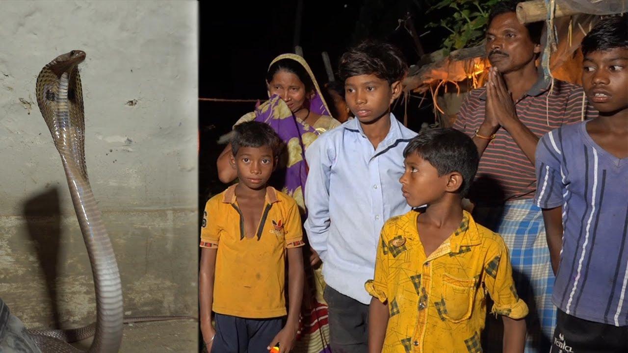 माँ के आंसू और ममता के सामने कोबरा हो गया फेल माँ के 4 बच्चे माँ के गोद में|Venomous Snake,Cobra,CG