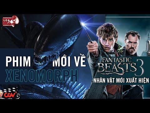 Fantastic Beast 3 liên quan tới Harry Potter, Lý do rồng đỏ Mushu biến mất trong Mulan live action