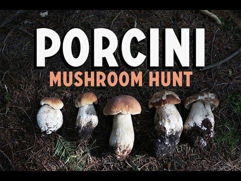 Foraging for Porcini Mushrooms | Mushroom Pasta