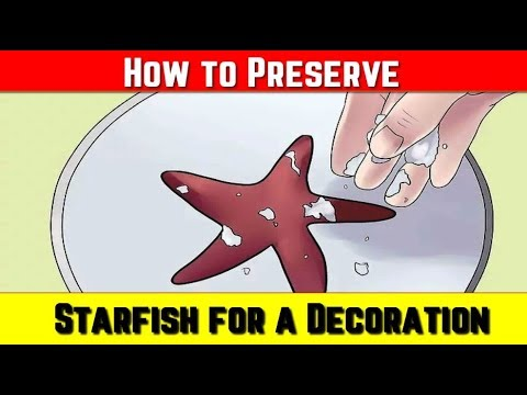 How To Preserve A Starfish For A Decoration