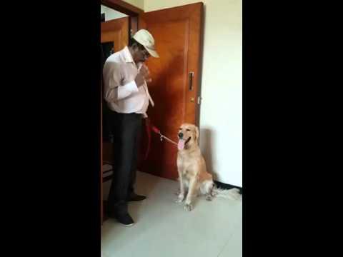 Dog with amazing mathematical skill