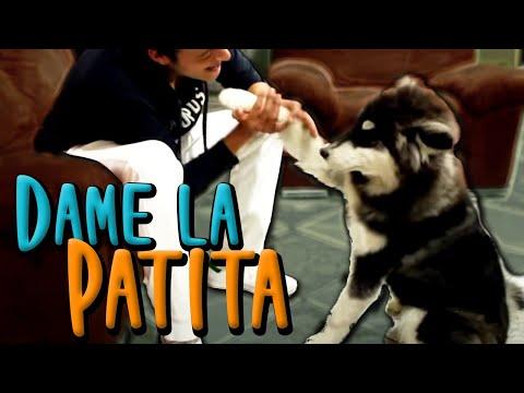 Animais engraçados - Cães e gatos engraçados #15 (reeditado) from YouTube · Duration:  10 minutes 32 seconds