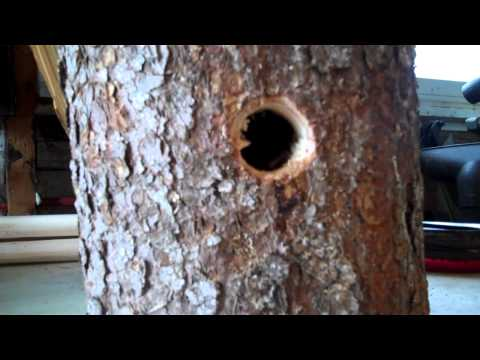 HOW TO BUILD A BIRD HOUSE woodworking