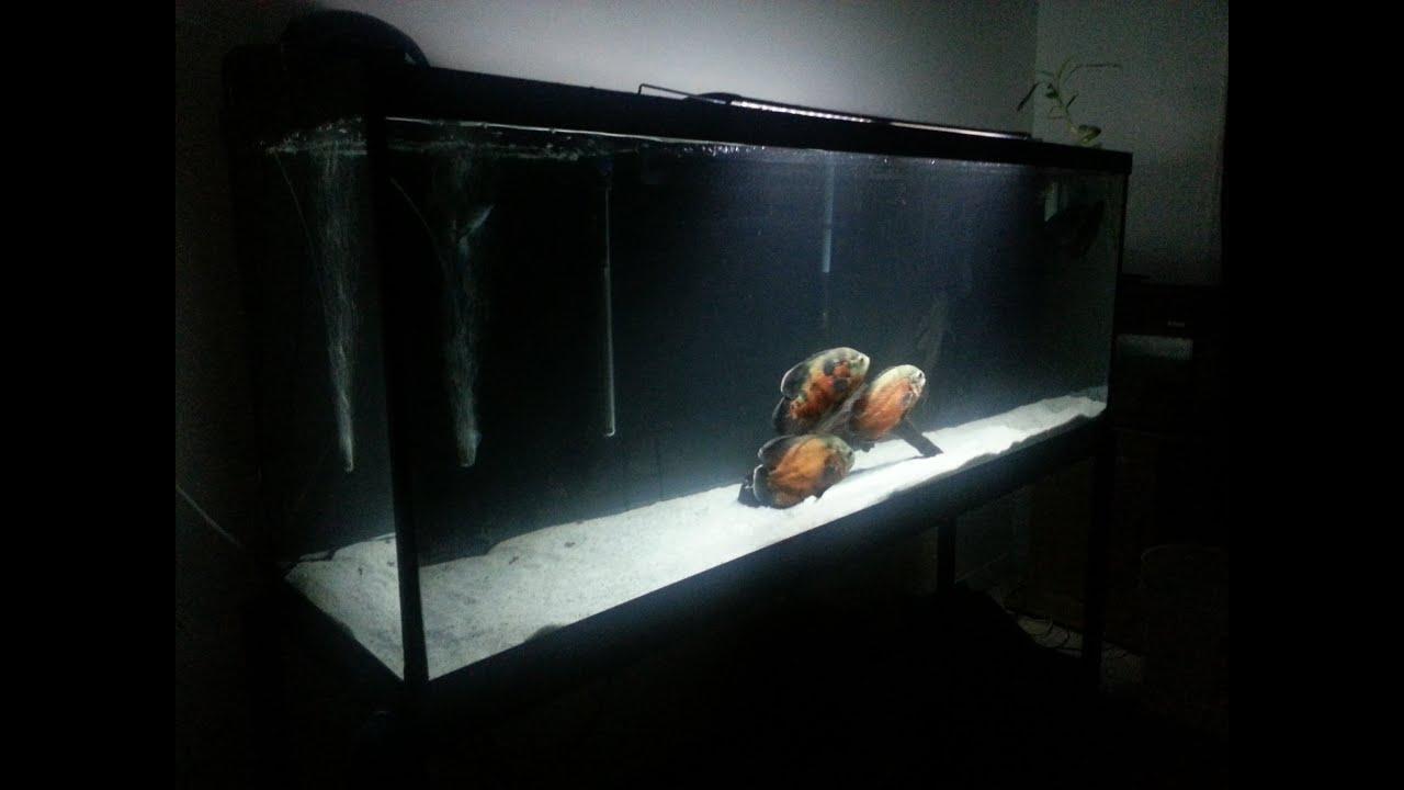 New 150 gallon fish tank youtube for 125 gallon fish tank stand