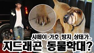 """지드래곤 강아지 동물학대? """"샤페이 가호"""" 포천 펜션 …"""