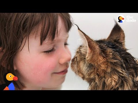 Cat And His Favorite Girl Are Unstoppable | The Dodo