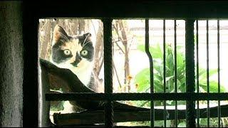 Окошки для кошки. Уссурийские подвалы должны быть оборудованы под бездомных кошек