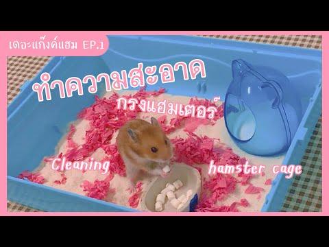 ทำความสะอาดกรงหนูแฮมเตอร์  Cleaning hamster cage | เดอะแก๊งค์แฮม EP.1