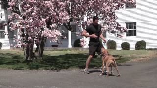 In One Session: Dog Training That Goes Beyond Commands