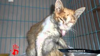 Живодер расстрелял кошку и оставил умирать на дороге