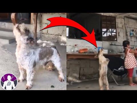 5 Vídeos Inexplicables Que Te Harán Temblar E2 | T3