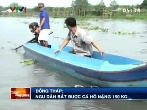 Nông dân lại bắt được cá Hô