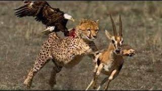 アフリカの野生の犬vsヒヒ途方もない戦い!Angry Baboon Fight Highligh...