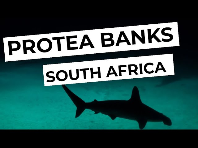 Scuba Diving in Proteabanks - South Africa