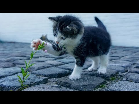 Baby Cats - Cute and Funny Cat Videos Compilation 2020 |Funny Cat Video 2020|