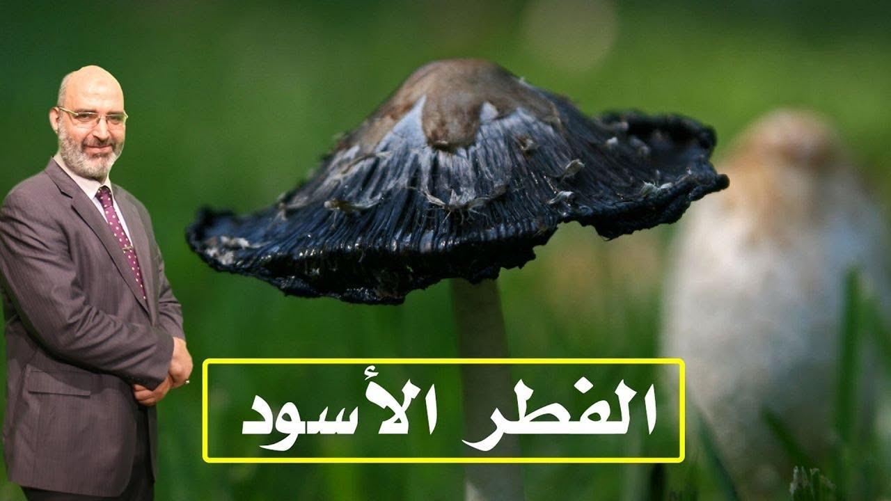 الفطر الأسود | الدكتور أمير صالح | الطب الآمن