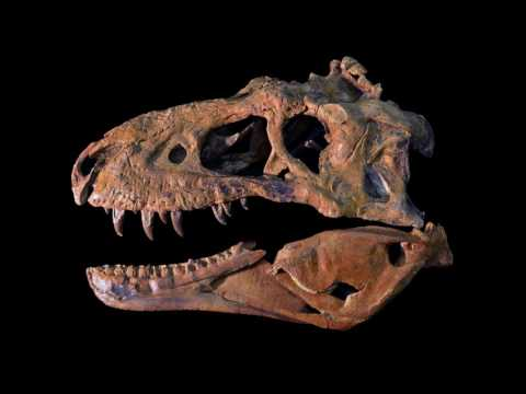 Looking Inside a Tyrannosaur
