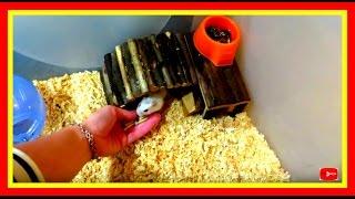 Vlog: У Джесси новая квартира! Переселение из клетки в контейнер #Хомяки