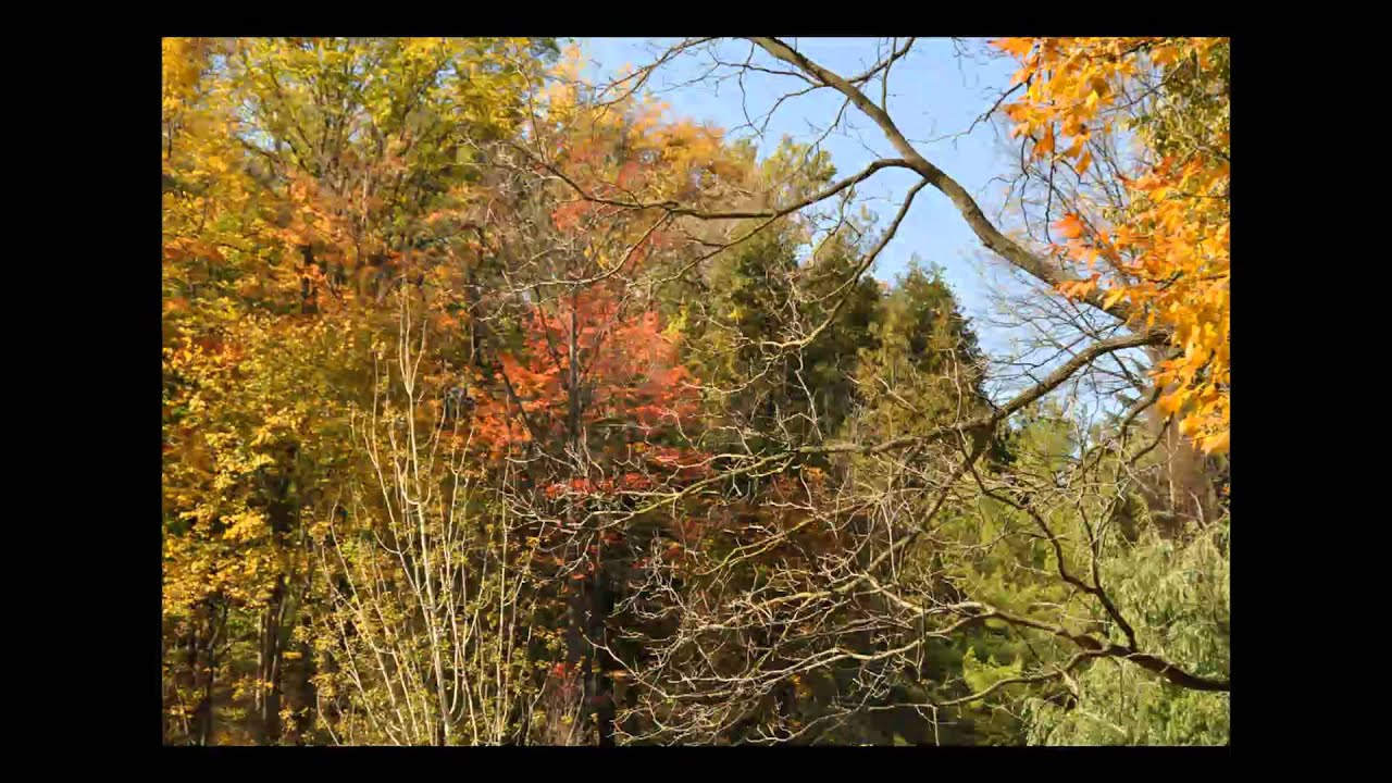 Edward Gardens 2010 Fall - YouTube
