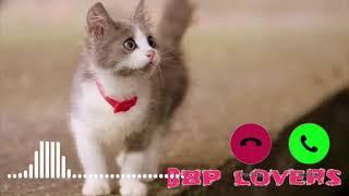 Cute sms ringtone, Notification Ringtone,Massage Ringtone, best ringtone viral cute cat sms tone