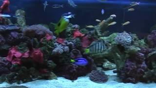 marine aquarium 8x2x2 september 2010
