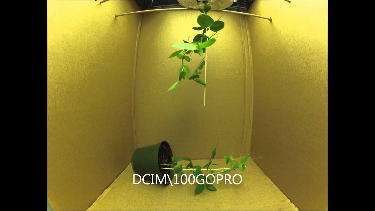 lab report on plant tropism Listen to this podcast from radio lab about some really creepy  tropism in seedlings  one of the most important external factors influencing plant growth is.