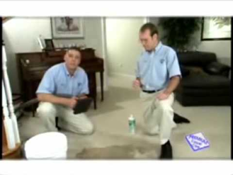 carpet-cleaning-pensacola:-pet-stain-removal