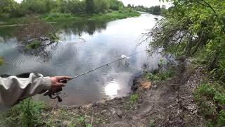 рыбалка спиннинг ловим окуня в реке воронеж два часа удовольствия