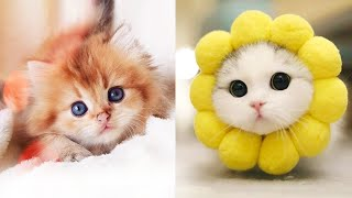Baby Cats - Cute And Funny Cat Videos Compilation #32 | Aww Animals