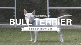 BULL TERRIER BREED REVIEW