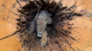 Most MYSTERIOUS Discoveries Of Mummified/Petrified Animals!