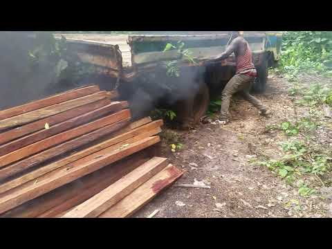 Can The Government Of Ghana Stop Illegal Timber Contractors?