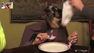 Как  правильно кормить свою собаку