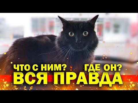 Вся правда про побитого кота. Босс сломал свой новый диван / SANI vlog
