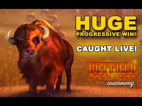 Buffalo Stampede Slot **HUGE PROGRESSIVE WIN** - Slot Machine Bonus - 동영상