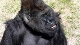 2011.03.27撮影 千葉動物園のボランティアガイドさんに「やさしくて、か...