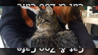 Шалена парочка [VLOG_5] — Cat & Zoo Cafe(Во Львове есть два кафе для настоящих любителей котиков – «Cat Cafe» и «Zoo Cafe». Какое лучше? В «Zoo Cafe» можно поес..., 2016-01-08T17:01:01.000Z)