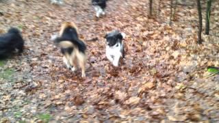 Hondenuitlaatservice 'de Beestenboel' - Eerste Wandeling Tygo