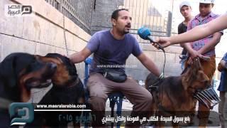 فيديو   بائع بسوق السيدة: الكلاب موضة.. والكل بيشتري