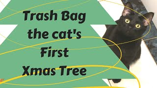 Trash Bag's first Xmas Tree!
