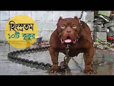 বিশ্বের সবচেয়ে হিংস্র ১০টি কুকুরের জাত !! 10 MOST DANGEROUS DOG BREEDS