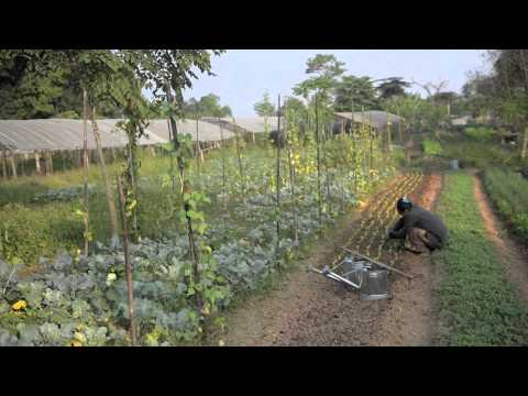 Organic Farming along the Mighty Mekong