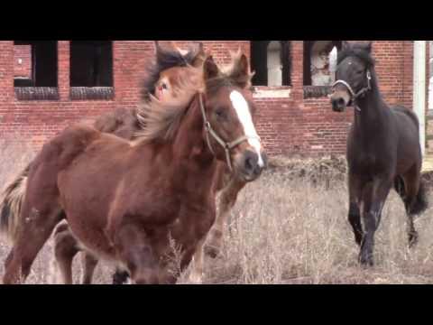 Los koni