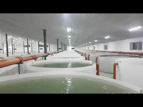 Выращивание Осетра Форели и других видов рыб....Часть 2 продолжение строительство рыбной фермы.ПП..