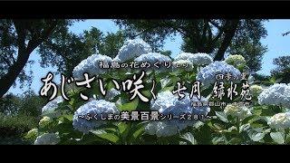 福島の花めぐりより ~あじさい咲く 四季の里 緑水苑~