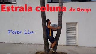 Como alinhar sua coluna na árvore terapêutica